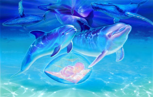 Cetaceans72jeanluc 2